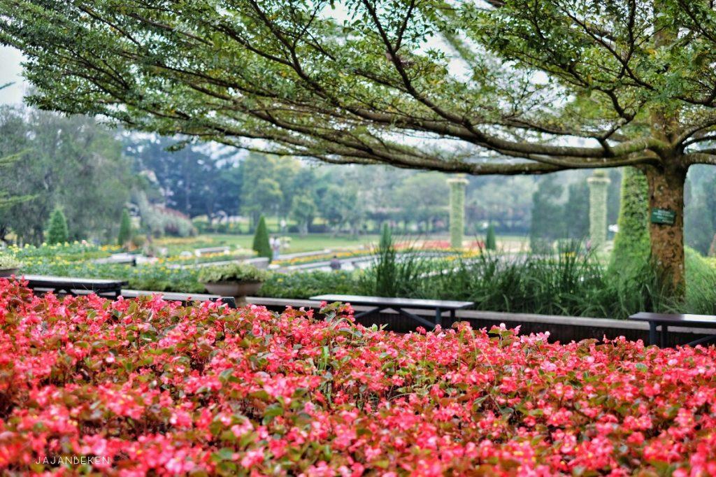 jajanbeken lokasi taman bunga cipanas puncak