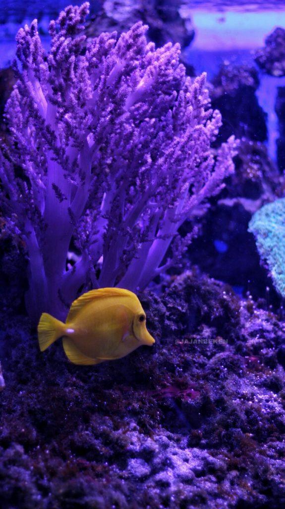 jajanbeken aquarium jakarta
