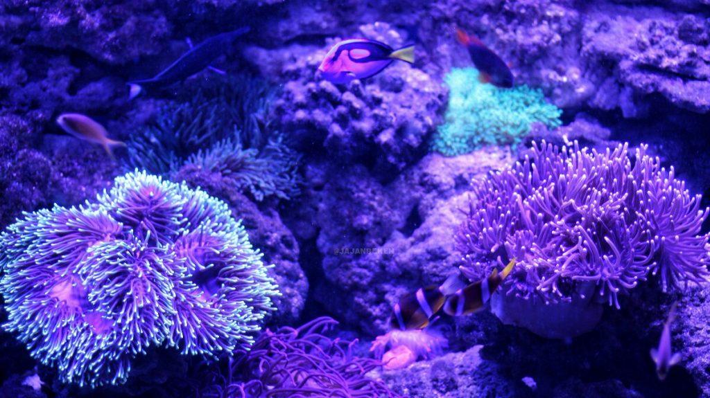 jajanbeken jakarta underwater