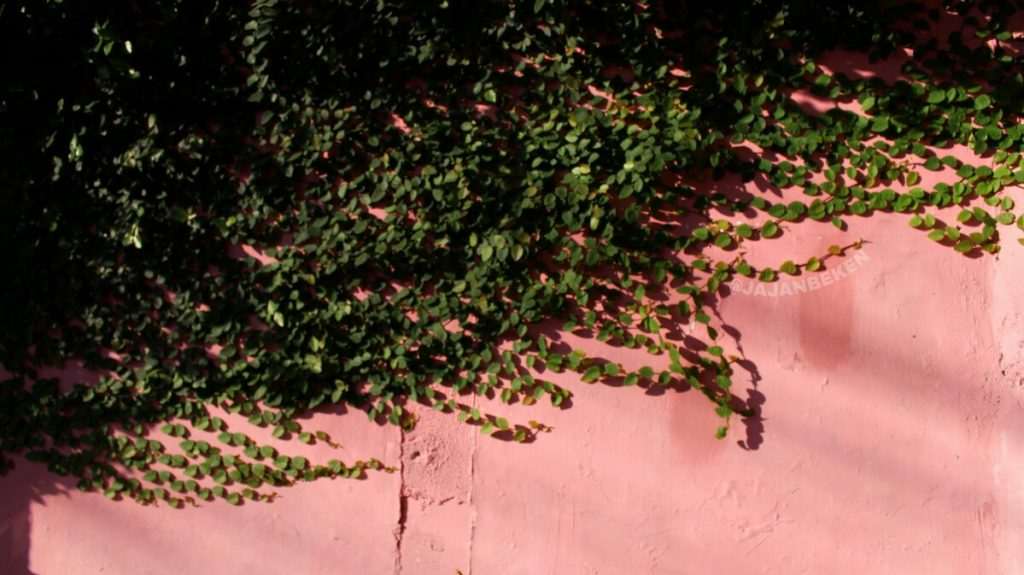 jajanbeken tempong pink bali price